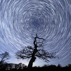 Star trail around old Oak Tree