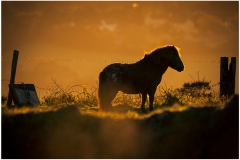 Much of the land up Carn Marth is used for grazing.  Open to the elements these animals have to be hardy.  This pony was enjoying the early morning sun.