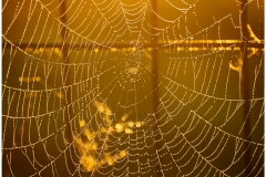 I love this image.  The warm light as the sun rose only lasted a few minutes but brought this spider web in the morning dew to life.