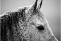 One of the many horses up Carn Marth.