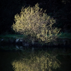 Tree reflecting in the lake up Carn Marth
