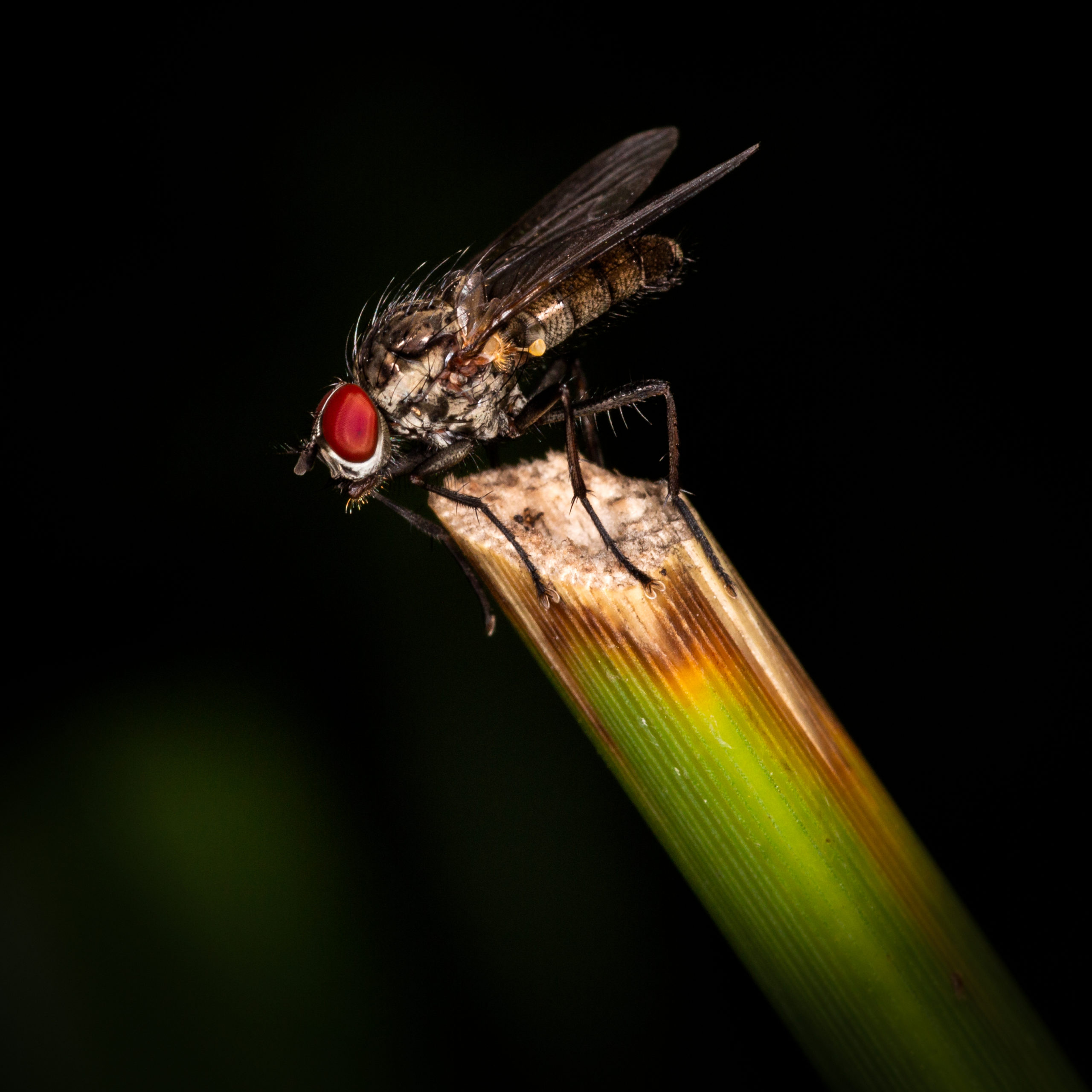 Fly on stick