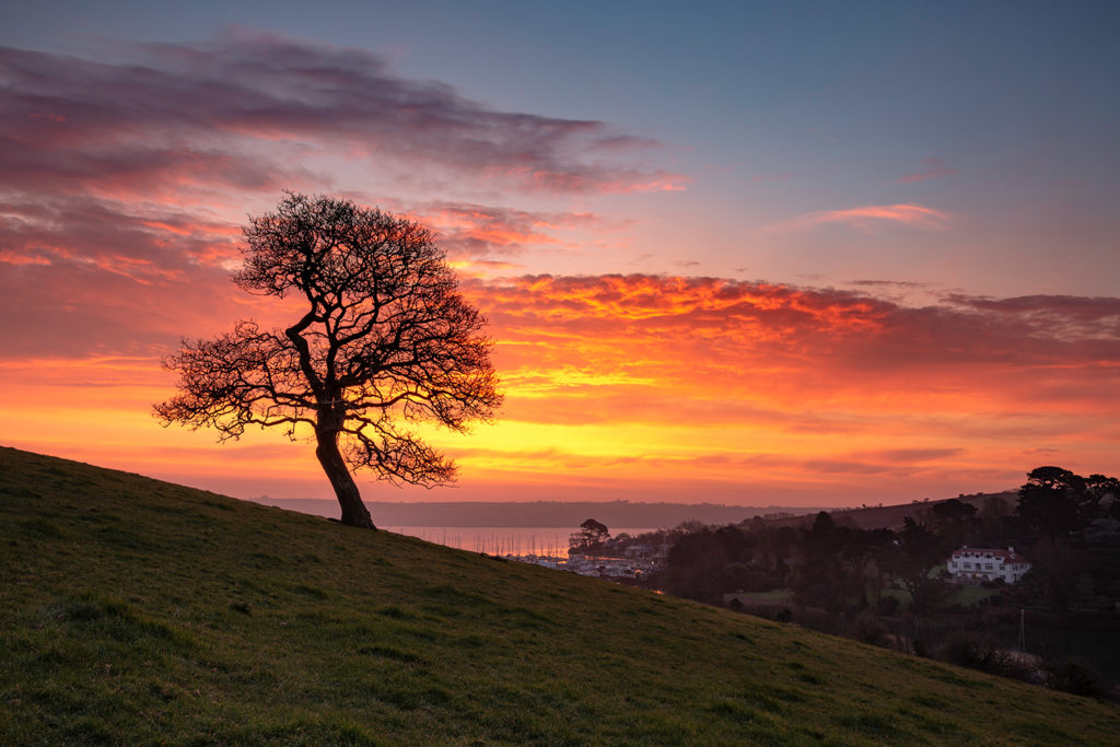Sunrise tree, Mylor