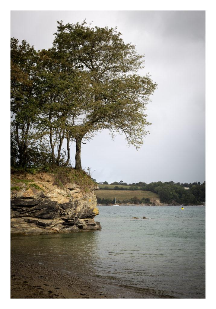 Tree on the cliff edge