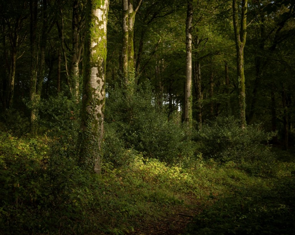 Idless Woods, Cornwall